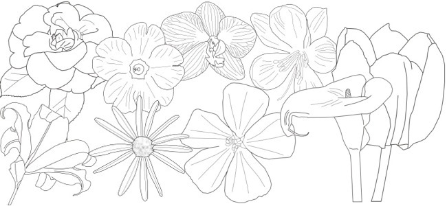 May flowers outline