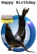 "sea lion and cake ""Happy Birthday"""