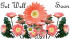 Get Well card flowers