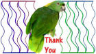 Thank You card image parrot