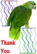 Thank You image parrot