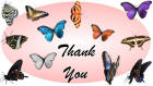 Thank You card image butterflies