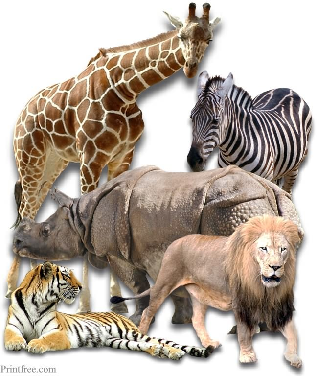zoo animals image
